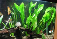 Photo of گیاه اسپاتی فیلوم آبزی