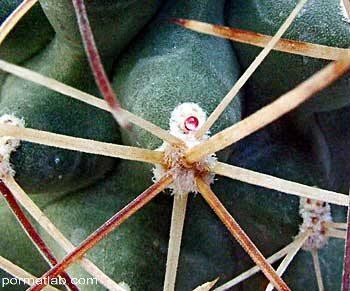 cactusnectary35