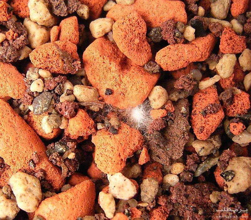 کاشت بذر کاکتوس - سایت پر مطلب