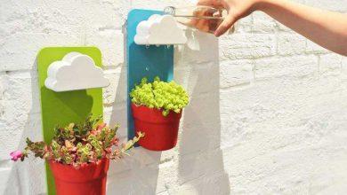 Photo of آب نمای خلاقانه برای آبیاری کاکتوس و گلهای خانگی