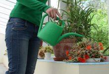 Photo of راهکارهای پرورش گیاهان آپارتمانی