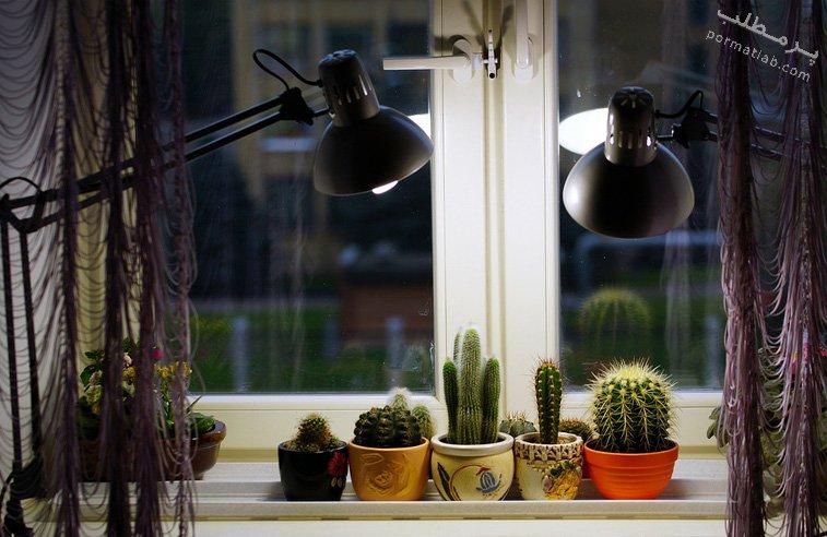 نور مناسب برای نگهداری کاکتوس