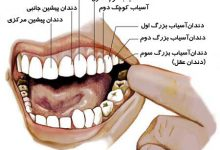 Photo of اطلاعات دهان و دندان جی یو ام