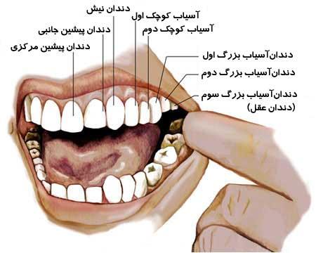 دهان و دندان جی یو ام