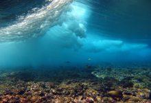 Photo of ماسکهای صورت و خمیردندان حیات دریایی را به خطر میاندازد!
