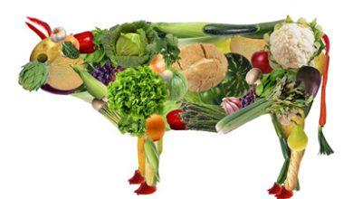 Photo of ۱۱ نوع غذا و گروه های غذایی برای گیاهخواران