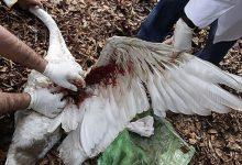 Photo of برای مراقبت از پرنده بیمار و آسیب دیده چکار باید کرد؟