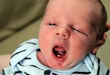 Photo of مغز نوزاد تازه متولد شده