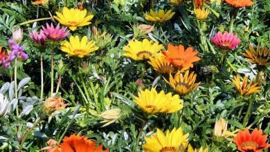 Photo of گیاه آصف السلطنه