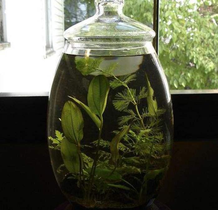 گیاهان آبزی در ظروف شیشهای