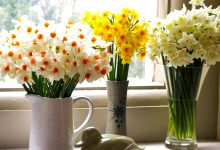 Photo of خوشبوترین گلها کدام هستند؟