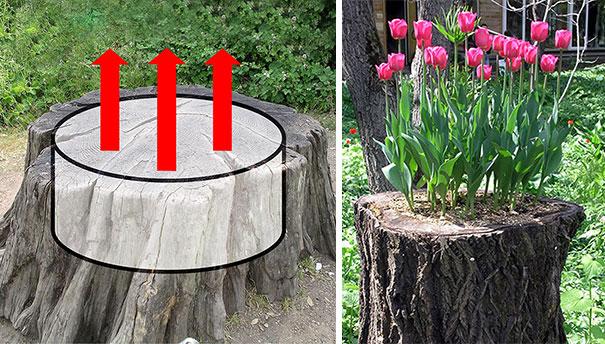 تبدیل تنه درخت به گلدان