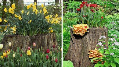 Photo of تبدیل تنه درخت به گلدان + عکس