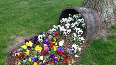 Photo of ترکیب زیبا و خلاقانه گل و گلدان در فضای باز + عکس