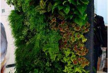 Photo of یک دیوار سبز در منزل بسازید