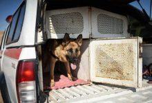 Photo of مانور امداد و نجات سگ های تجسس