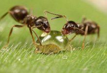 Photo of نمونههای زیبا از عکاسی ماکرو حشرات