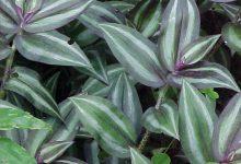 Photo of گیاه برگ بیدی