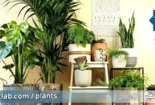 Photo of نمونه آویزان کردن گیاهان آپارتمانی