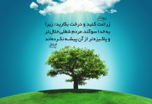 Photo of زراعت کنید و درخت بکارید