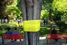 Photo of زدن نوار زرد روی درختان برای مگس سفید