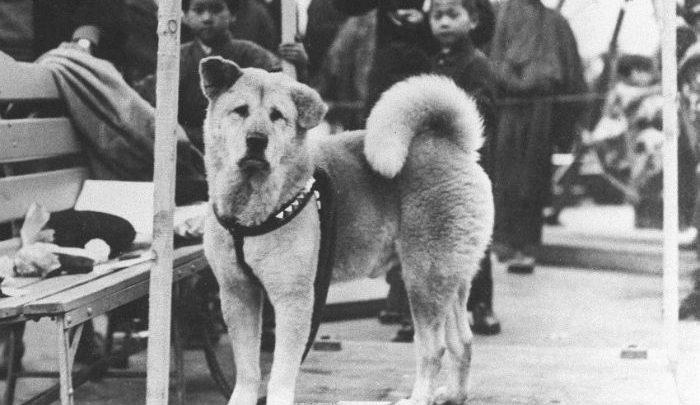 Photo of سگ با وفا بعد از فقدان صاحبش