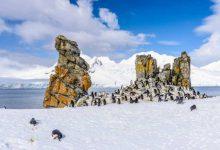 Photo of قطب جنوب از نگاه تصویر