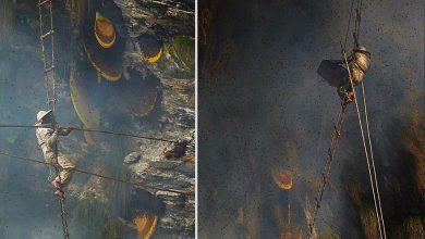 Photo of بدست آوردن عسل از دل صخرههای نپال