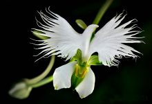 Photo of شباهت بسیار عجیب گلها به موجودات زنده