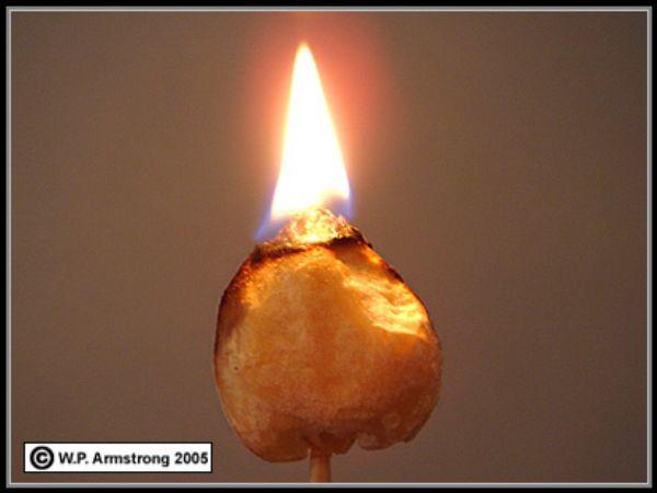 درخت آجیل شمع