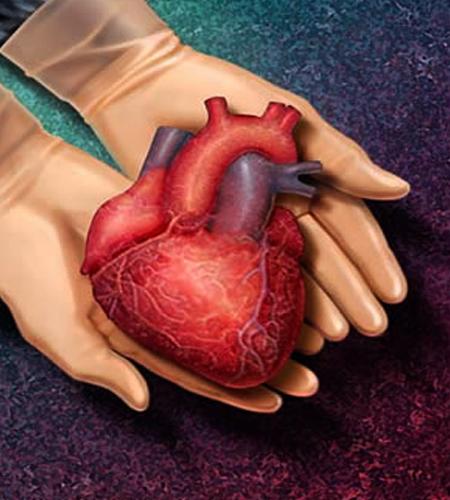 پیوند قلب از کجا و چگونه؟