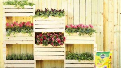 Photo of باغچه دیواری بسازید