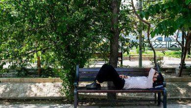 Photo of استراحت در پناه سایه درختان پارکها