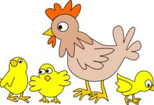 Photo of نقاشی کودکانه مرغ و خروس برای رنگ آمیزی