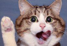 Photo of حرکات و شکلکهای با مزه در رفتار یک گربه