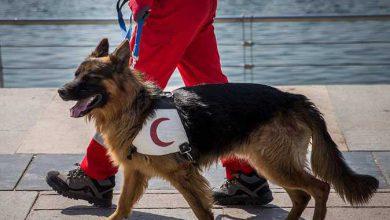 Photo of مانور سگ های جستجو و نجات در دریاچه