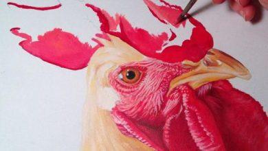 Photo of تصاویر نقاشی شده از خروس