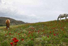 Photo of هوای بهارِی در خراسان شمالی
