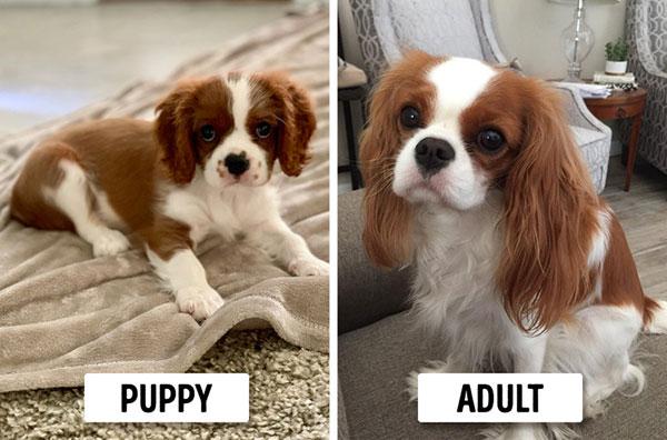 Photo of توله سگهایی که شبیه والدین خود هستند