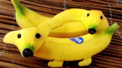 Photo of هنرنمایی با میوه موز – سری دوم