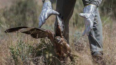 Photo of رهاسازی گونهای مختلف جانوری در پارک ملی خجیر