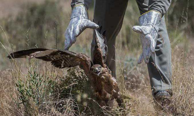 Photo of معرفی ۲۵ پرنده بزرگ شکاری