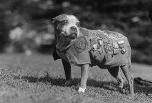 Photo of معروفترین حیوانات تاریخ