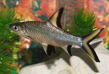 Photo of آشنایی با ماهی شارک
