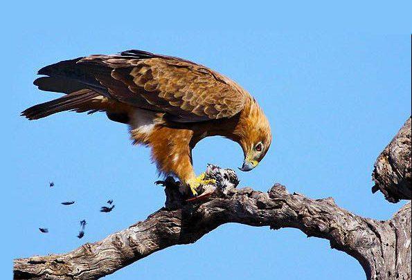 Photo of چرا پرنده های شکاری یکی از خوفناکترین موجودات روی زمیناند