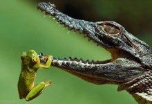Photo of تصاویر جالب از قورباغه ها