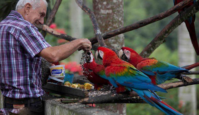 Photo of طوطی های شهر کاراکاس و دوستی آنها با انسان ها