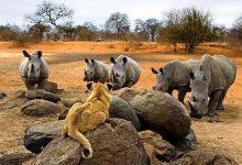 Photo of آفریقای جنوبی پر از مناظر شگفتانگیز است