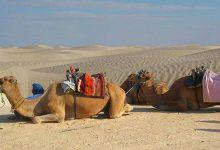 Photo of ماجراجویی در جنوب تونس