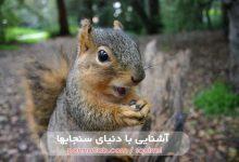 Photo of سنجاب